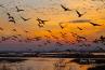 The Sandhill crane migration at Rowe Sanctuary