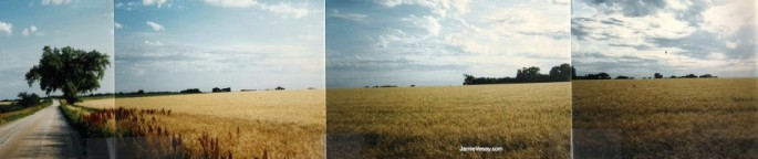 Wheat. Old-school pano