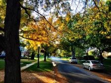fall-16-dundee-ne-jamie-vesay-wm-img_8837