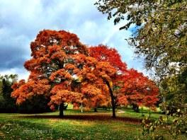 Fall Memorial Park Omaha NE 102315 IMG_3624