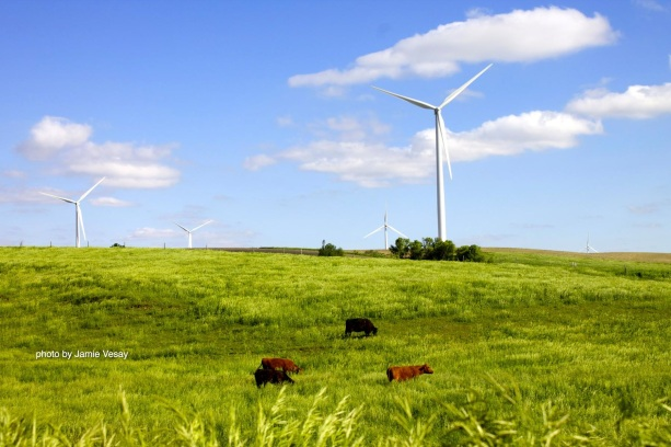 th_Wind farm Petersburg cows IMG_1640 copy