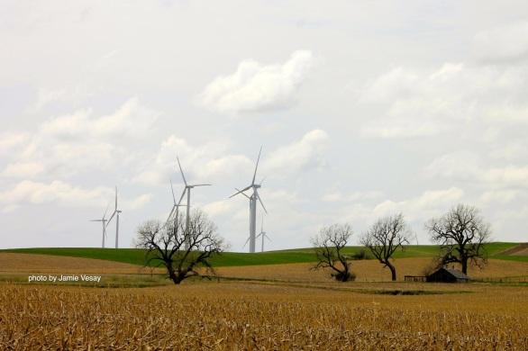 th_Wind farm Petersburg trees cut corn IMG_8254