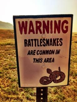 Snake sign Jamie Vesay IMG_3883